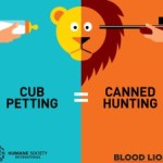 Cub petting trophy hunting