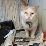 Hoarded cat