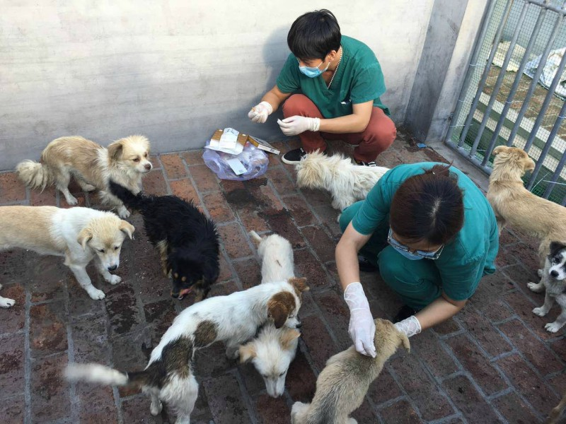 Treating dogs in Yulin
