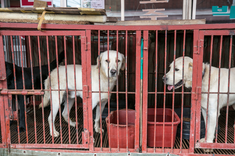 Rescued from a dog meat market