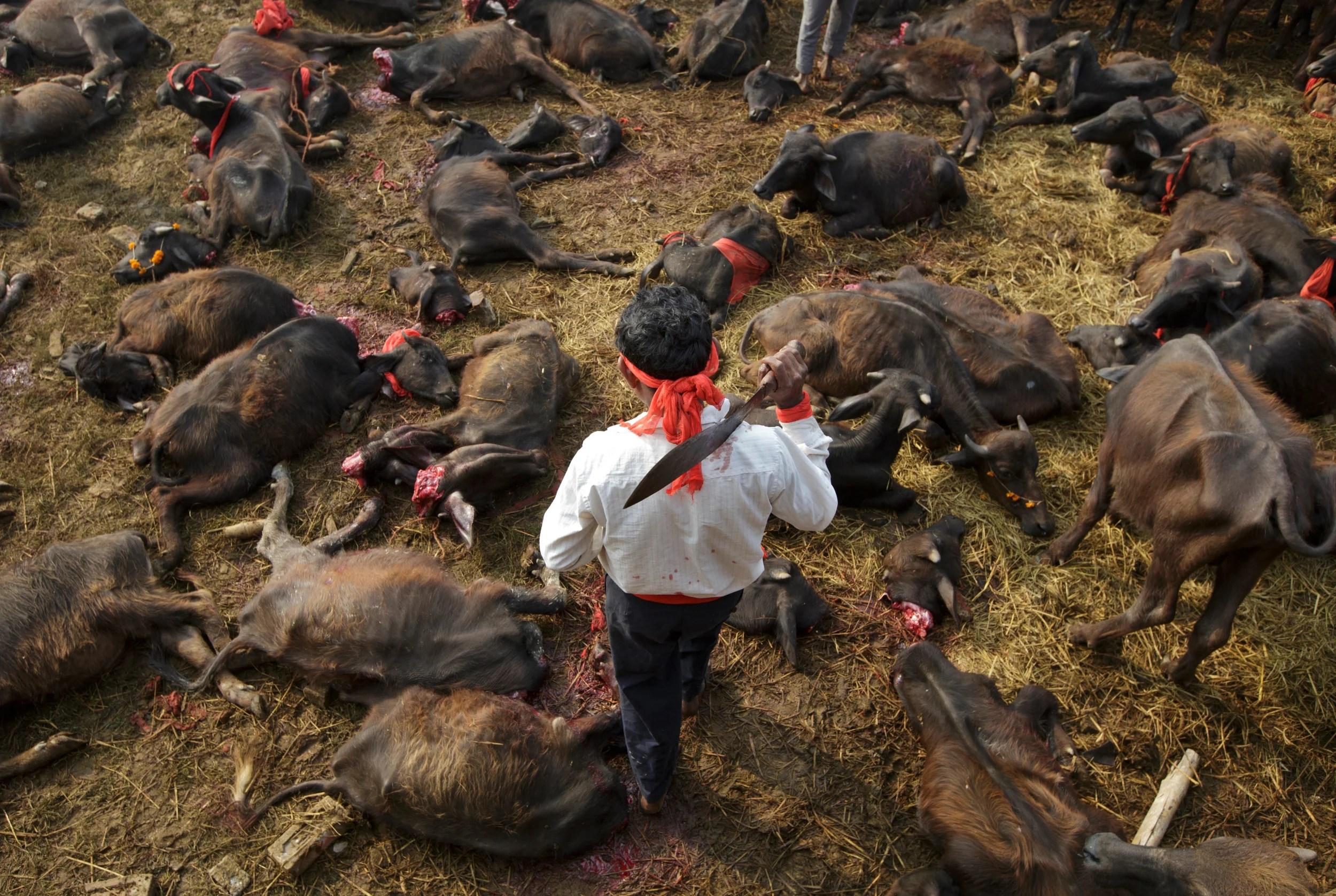Gadhimai deaths