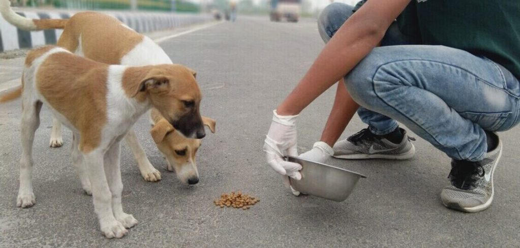 Feeding dogs in India