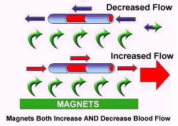 Magnets increase blood flow 2