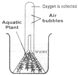 Kerala Syllabus 9th Standard Biology Solutions Chapter 1 Protectors of Biosphere 9