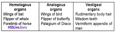 Plus Two Zoology Chapter Wise Questions and Answers Chapter 5 Evolution - 2