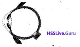 Kerala SSLC Biology Model Question Paper 3 English Medium - 14