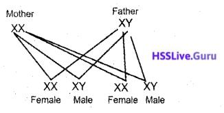 Kerala SSLC Biology Model Question Paper 3 English Medium - 15