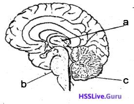 Kerala SSLC Biology Previous Year Question Paper March 2019 English Medium - 18