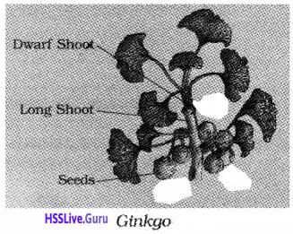 Plus One Botany Notes Chapter 2 Plant Kingdom 6