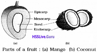 Plus One Botany Notes Chapter 3 Morphology of Flowering Plants 17