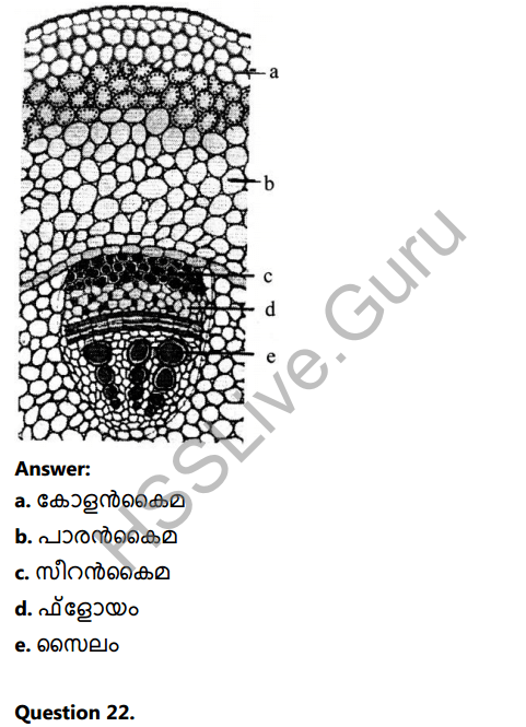 Kerala Syllabus 8th Standard Basic Science Solutions Chapter 2 Cell Clusters in Malayalam 28