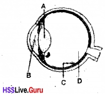 Kerala Syllabus 10th Standard Biology Solutions Chapter 2 Windows of Knowledge - 33