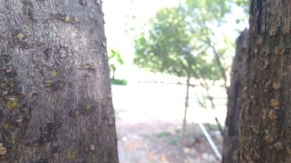 Focusing on the darker tree bark resulted in over exposure of the background.