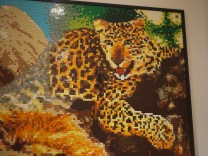 Big Five Leopard