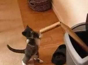 cat boxeador