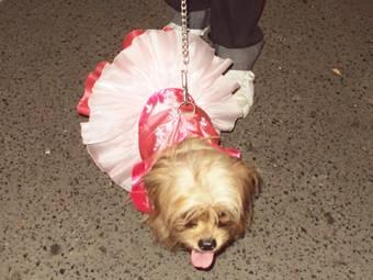 Disfraz de perritos llamo la atención al público
