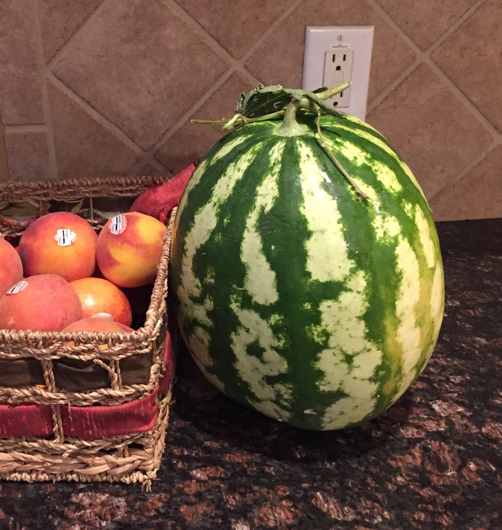 Watermelon Still Life