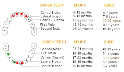 2013-06-28katie-teething- chart
