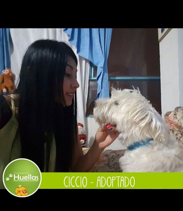 ciccio_003