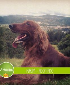 Hakim_002