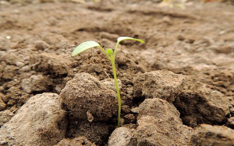 correcta germinacion de semillas en cultivo