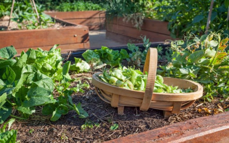 cultivo en huerto perfecto