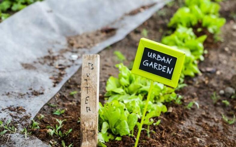 transplante en huerto ecologico