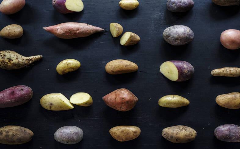 tipo de patatas en huerto