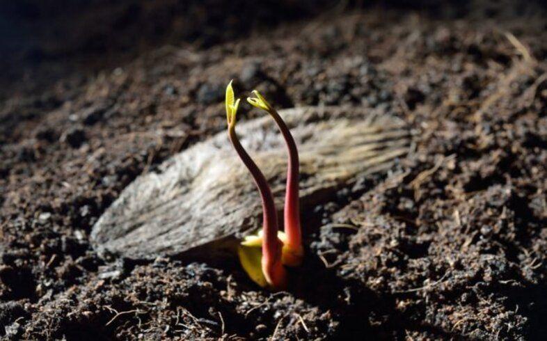 siembra de semillas para huerto