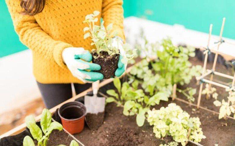 primer cultivo en huerto urbano
