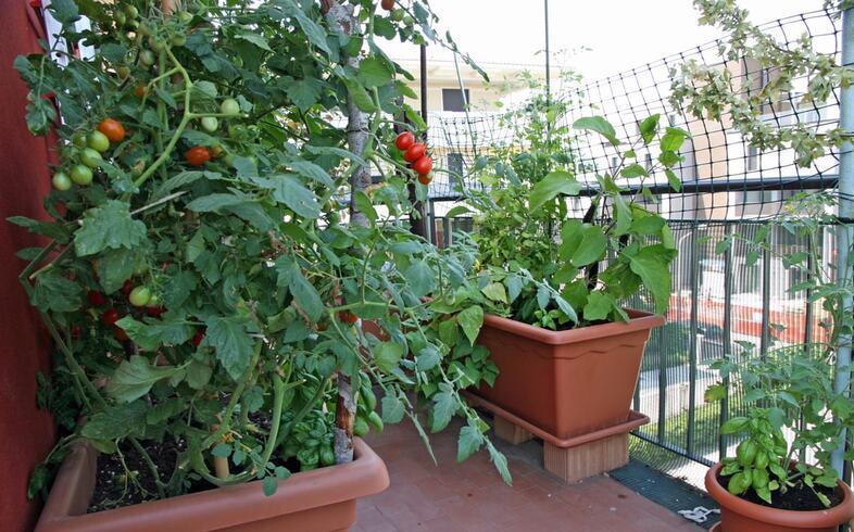 cultivo de hortalizas en balcon