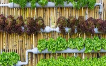 cultivo vertical de hortalizas