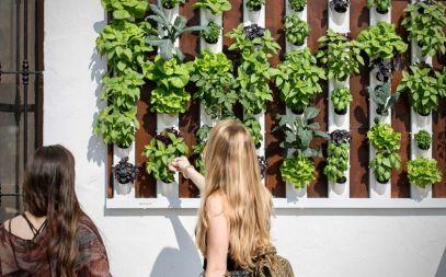 jardines o huertos verticales para decoracion