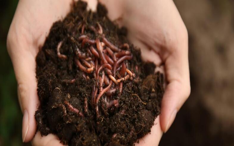 lombrices para mejorar el suelo