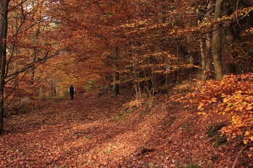 Herbststimmung 2014 5171
