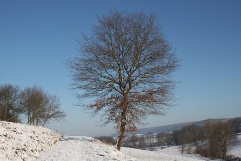 Baum im kleinen Tal 0036