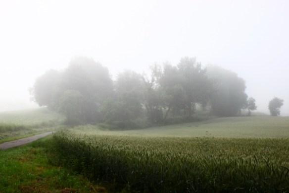 Nebel am Hang 1288