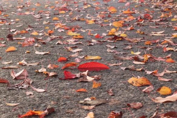 Herbst Herbst Herbst 5753