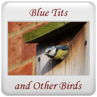 Blue Tits and Other Birds