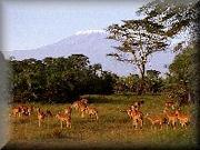 Dahl Safaris