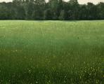 """<h5>Dans un Champ Colza Après la Récolte</h5><p>Oil on canvas, 51 x 63 ¾"""" (130 x 162cm)</p>"""