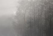 "<h5>Brouillard</h5><p>Oil on canvas, 35½"" x 51"" (90 x 130cm)</p>"