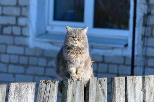 Grumpy kat op een schutting
