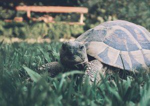 Schildpad van dichtbij