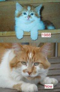 oudste kat