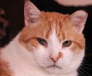 populaire kattennaam