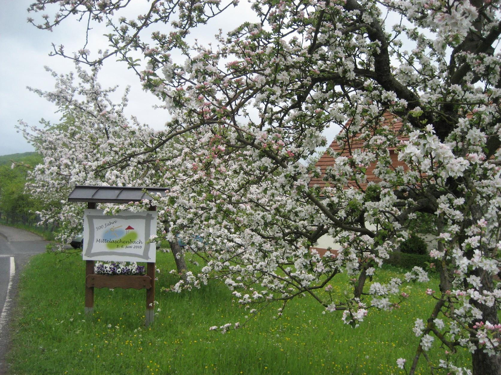 Ortseingang mit Kirschblüten