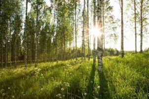 Penyelesaian Penguasaan Tanah dalam Kawasan Hutan