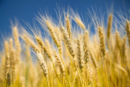 Harvest Services   –   dates, times and venues