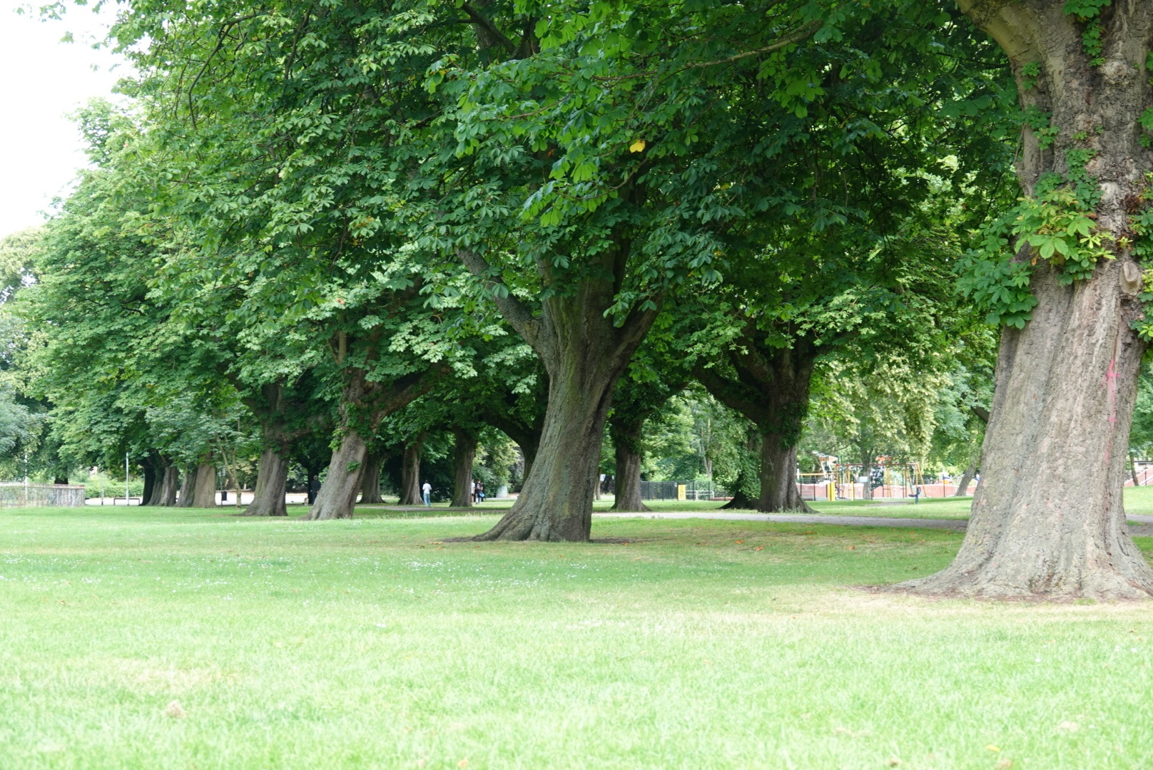 West Park in west Hull.